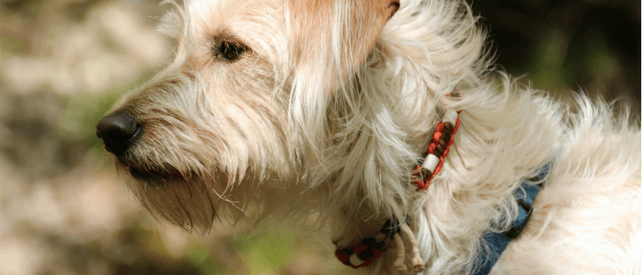 How To Stop Fleas From Biting Me And My Dog