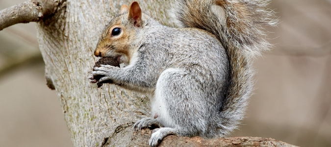 What Time Do Squirrels Go to Sleep