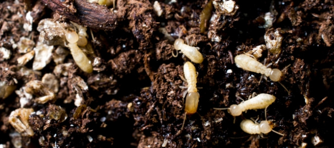 Signs Of Termites In Yard: What Should You Do?