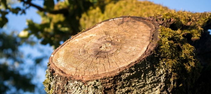 how to get rid of termites in a tree stump