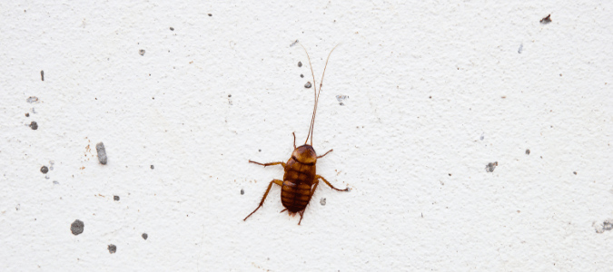 Roach infestation signs