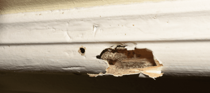 Do Termites Make Noise Your Questions Answered